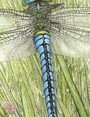 dragonfly-detail