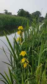 iris-canal