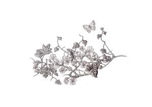 mayflowerpenandinkdrawing1