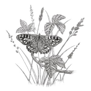 speckled-wood-butterfly2