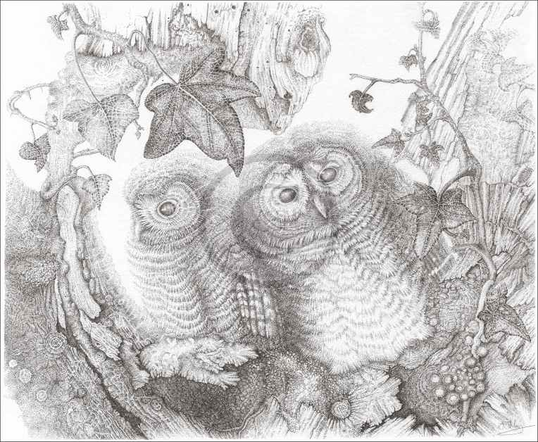 Tawny Owlets for website copyright