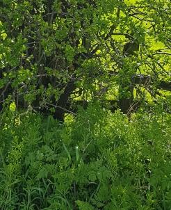 greens blog 9