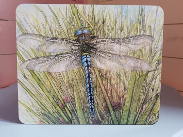 dragonfly 101