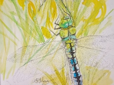 dragonfly 2 - Copy