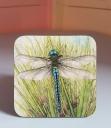 dragonfly coaster 1